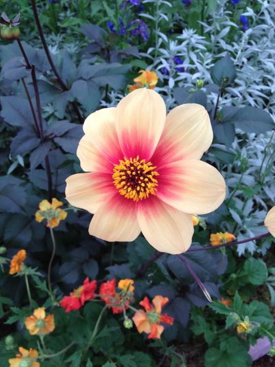 Från Chelsea Flower Show 2012